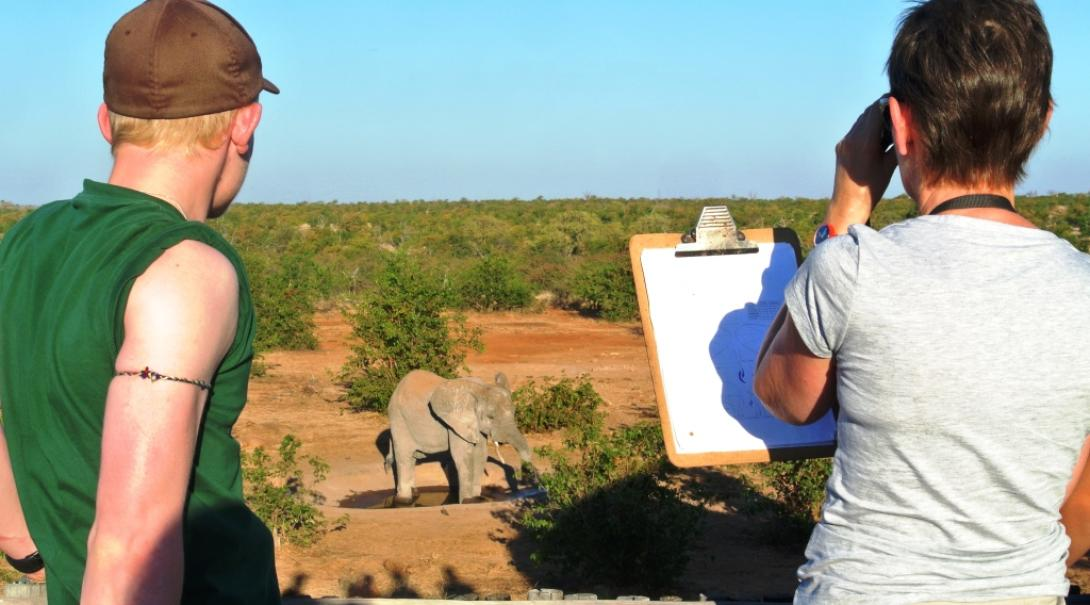 A group of Projects Abroad conservation volunteers collect data on elephants in Botswana.